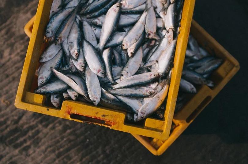Dicas de Como Limpar e Conservar o Peixe